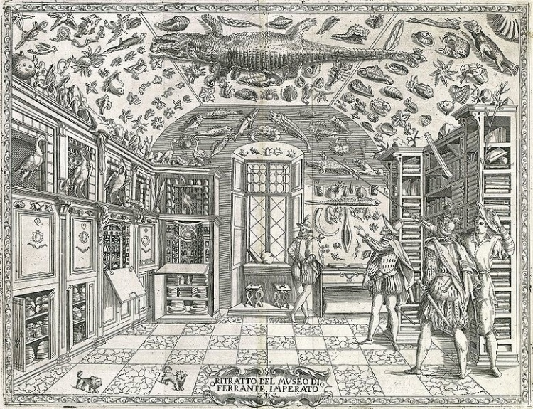 The Museum of Ferrante Imperato (1550–ca. 1625), Palazzo Gravina, Napels. Engraving from Dell'historia naturale (1599).