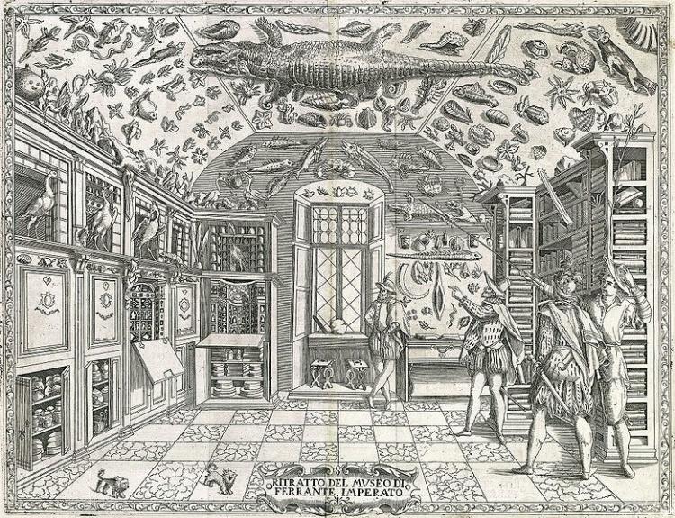 The Museum of Ferrante Imperato (1550–ca. 1625), Palazzo Gravina, Napels. Engraving from Dell'historia naturale (1599).